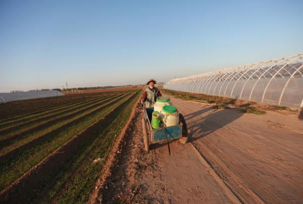 (一)指导思想。全面理解、准确把握中央关于全面深化农村改革的精神,按照加快构建以农户家庭经营为基础、合作与联合为纽带、社会化服务为支撑的立体式复合型现代农业经营体系和走生产技术先进、经营规模适度、市场竞争力强、生态环境可持续的中国特色新型农业现代化道路的要求,以保障国家粮食安全、促进农业增效和农民增收为目标,坚持农村土地集体所有,实现所有权、承包权、经营权三权分置,引导土地经营权有序流转,坚持家庭经营的基础性地
