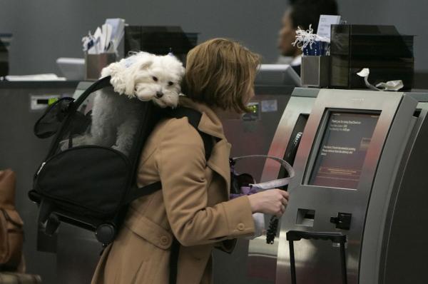 阿根廷的狗也能坐飞机客舱了