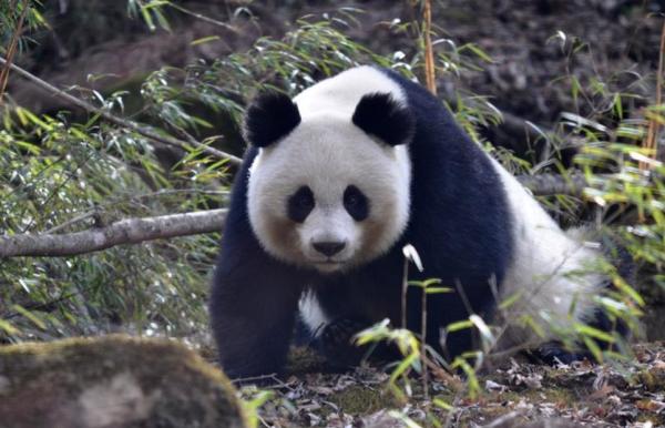 专家吁立法保护野生动物栖息地