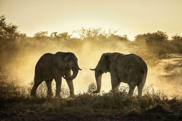 大象 动物 600_400