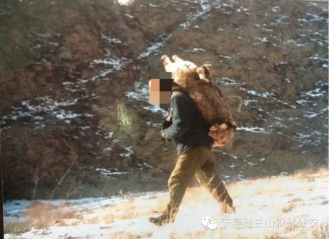 岩羊是几级保护动物