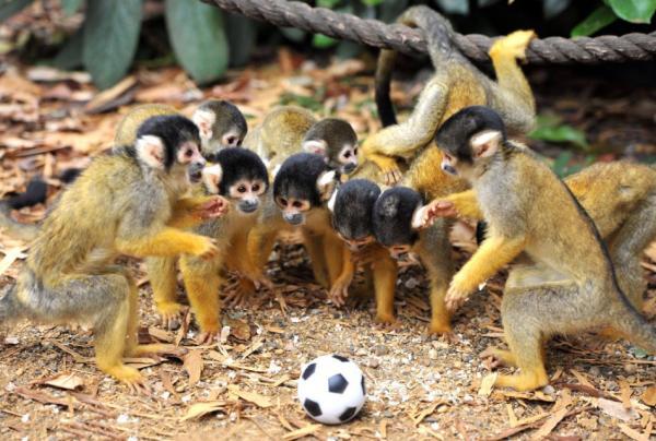 """专访一线野生动物保护人士:野保法已成""""足球法"""""""