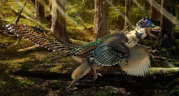 有羽���9�d:o�yc%��_辽宁又发现了一种新恐龙化石,有羽翅但是不会飞