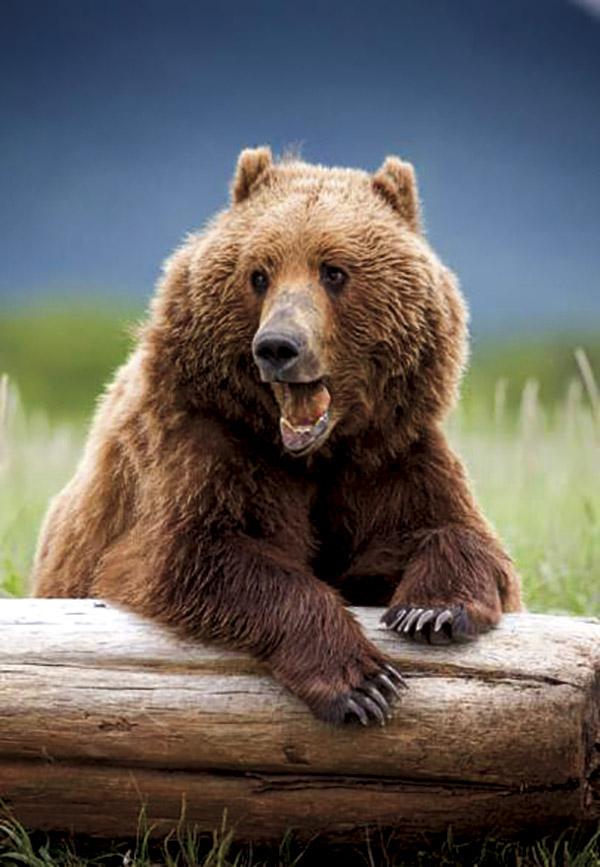 全球野生动物表演档期大曝光