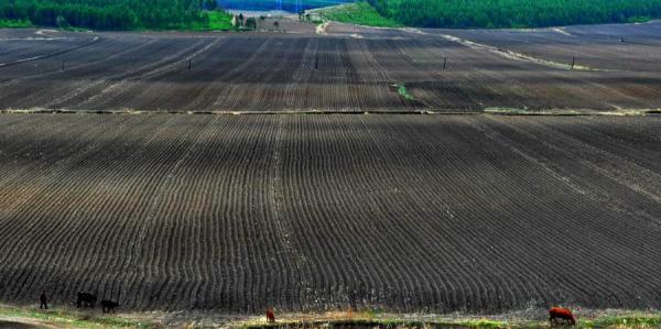 水利部:全国年均损失耕地百万亩,东北一些黑土层...