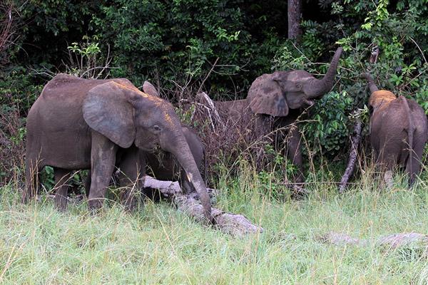 12家中国林企在非洲承诺保护野生动物