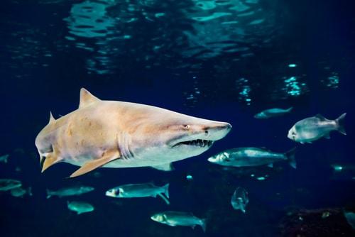 海洋里最危险的10种动物