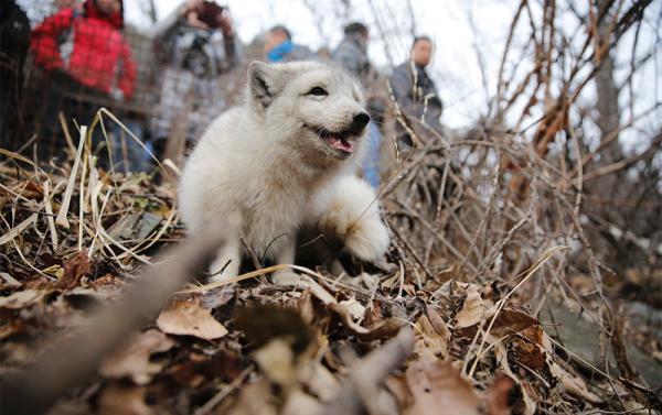 私放狐狸致生态环境破坏谁负责?