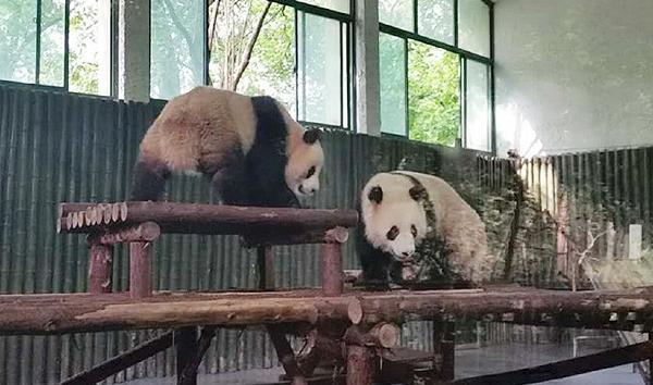cn)记者从上海动物园获悉