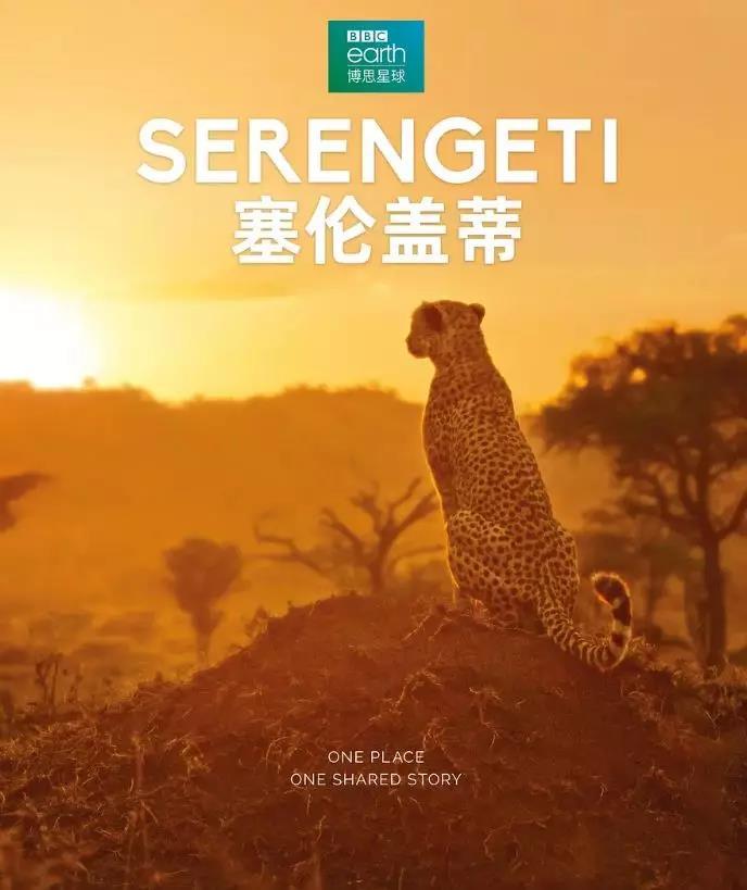 《塞伦盖蒂》海报