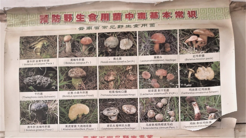 当地随处可见的野生菌科普资料。