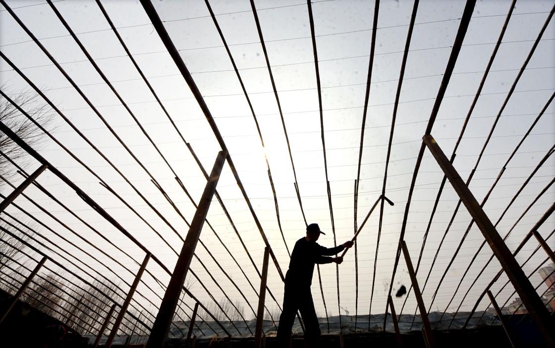 农民在山东省淄博市沂源县历山街道中儒林村大棚里整理土地。 新华社 资料图