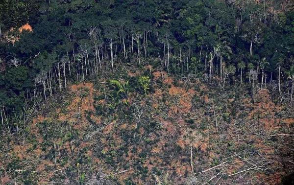 最新研究显示,亚马孙森林在被采伐后,再生速度比预期要慢很多。
