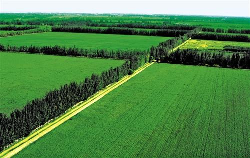 对答对气候变化,能否在全社会真实形成共识,在今天望来,仍是最为紧要的。图为三北防护林工程中的新疆农田防护林。 经济日报 图