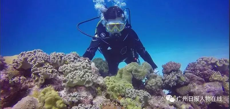 她在南海种珊瑚丨网友说这是全世界最美的工作