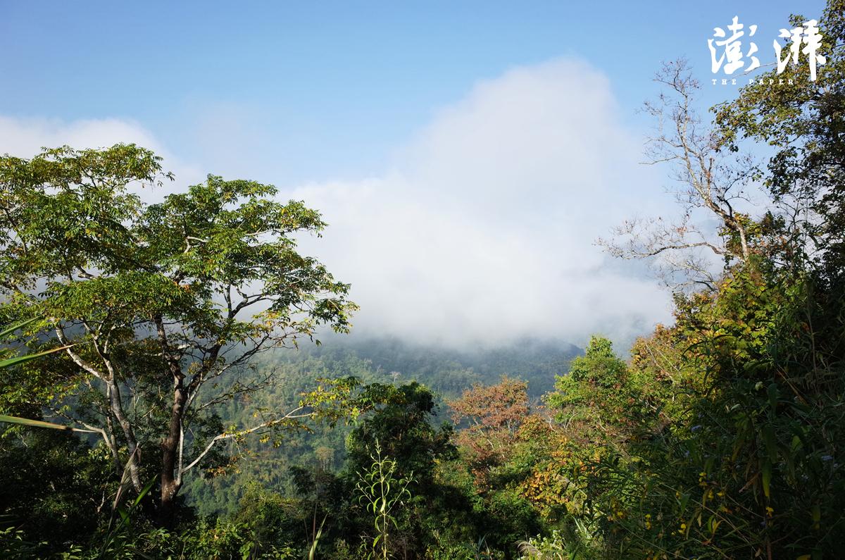 纳板河保护区森林景色
