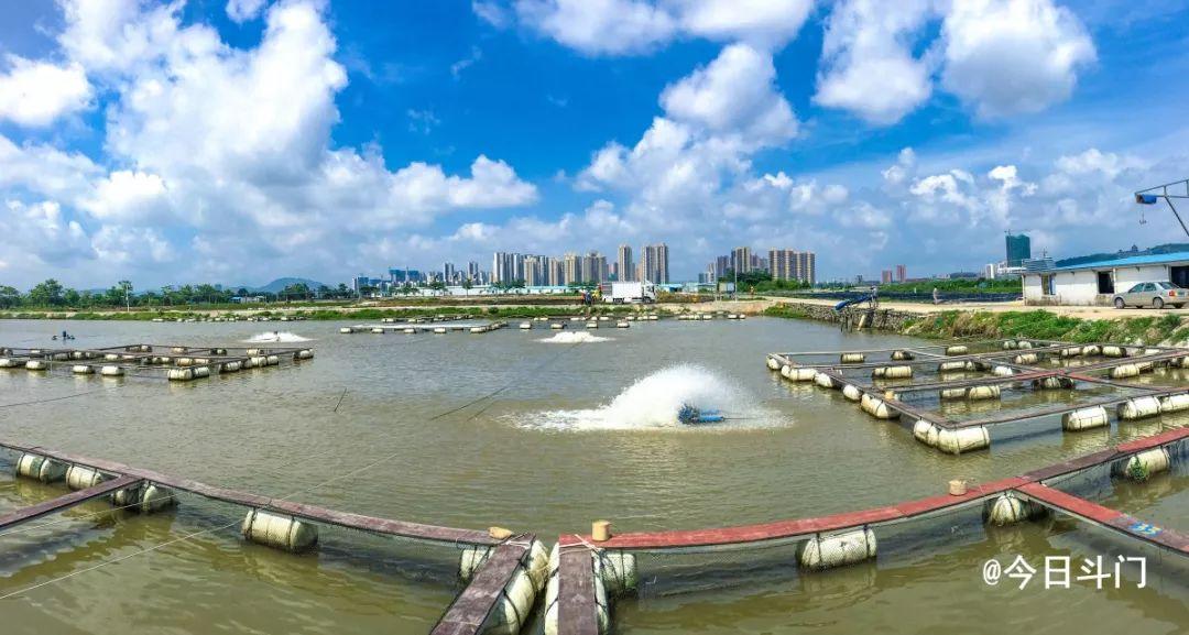 ▲湖江渔业养殖基地