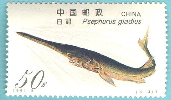 长江又一物种消失:水科院长江水产研究所专家称长江白鲟灭绝