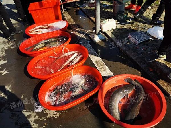 不良商贩往水里加柴油,快死的鱼又活蹦乱跳