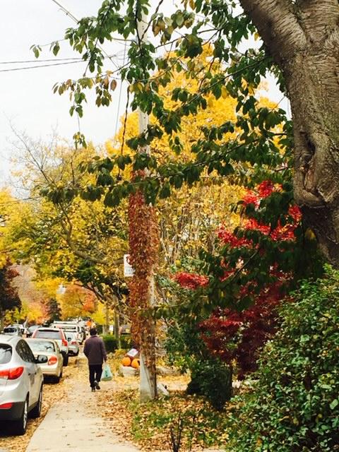 多伦多中城住宅区小街,一到秋季五色斑澜。余云 图