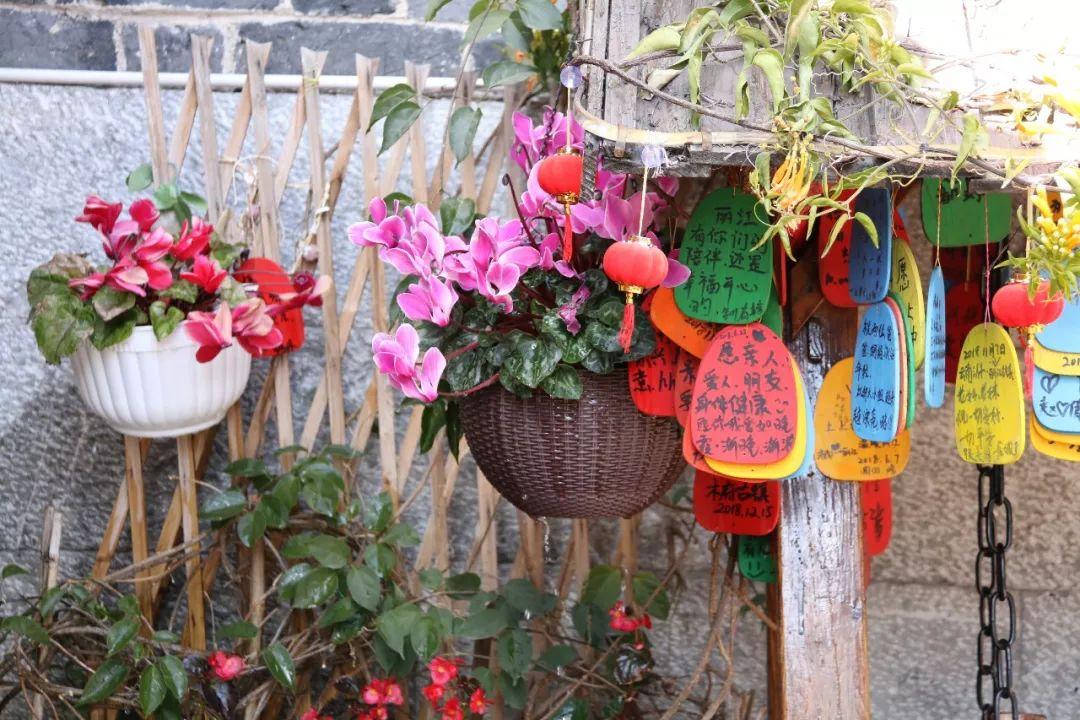 丽江古城的商户请放心,你们种的花花草草浇过