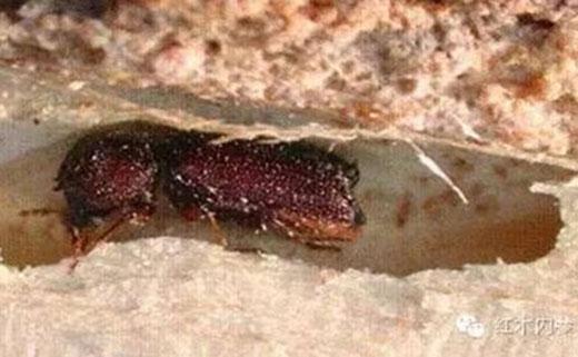 被虫蛀的木头图片