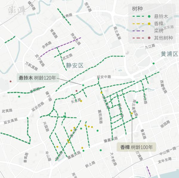 地图湃 秋日漫步 沪上林荫道分布地图