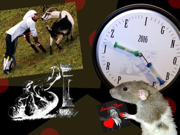 与山羊同居、石头性格研究、大众尾气减排都得了搞笑诺贝尔奖