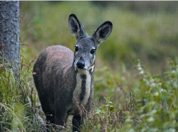 四川截获5只一级保护动物林麝,送安置途中撞击护栏伤痕累累 - 梅思特 - 你拥有很多,而我,只有你。。。