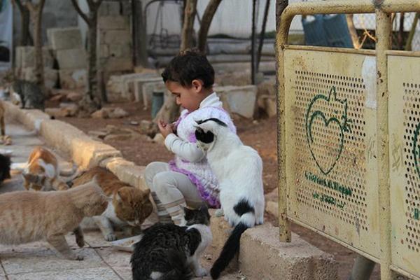 枪林弹雨里的净土!属于猫咪和孩子们的天堂 - 梅思特 - 你拥有很多,而我,只有你。。。