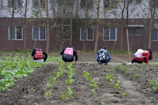 四川大学一学院将种田设为必修课,学生修满40学时才能