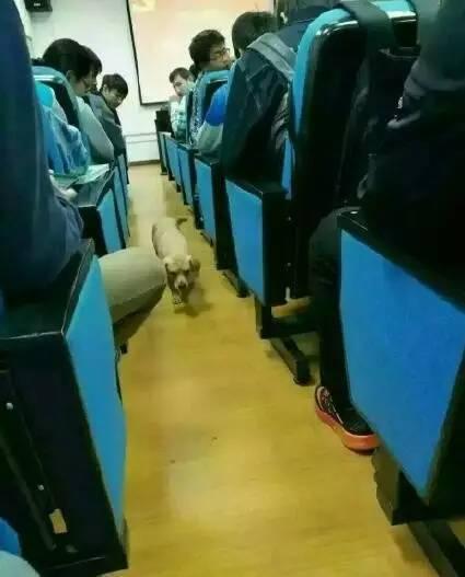 华东交大一工作人员校内杀流浪狗被指责,动保协会支招高校 - 梅思特 - 你拥有很多,而我,只有你。。。