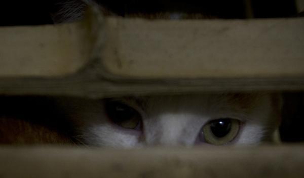 猫狗绝育人士的自白:不愿绝掉它们的孩子,要绝掉的是流浪 - 梅思特 - 你拥有很多,而我,只有你。。。
