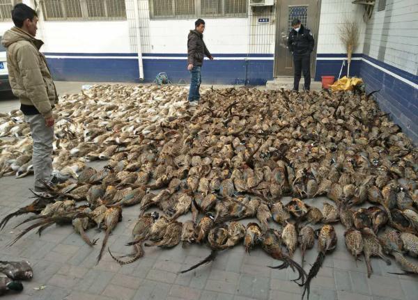 """天津一农贸市场查获近九百只""""野味"""",警方:尚不够追究刑责 - 梅思特 - 你拥有很多,而我,只有你。。。"""