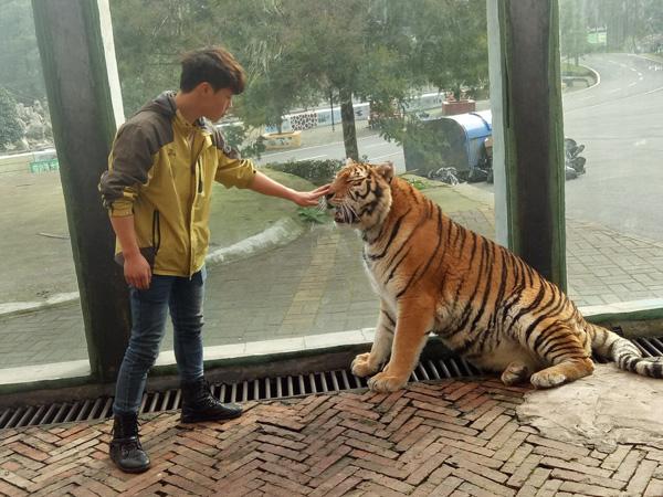 """贵阳野生动物园证实 虐虎视频确发生在该园内,回应""""虐虎"""":为饲养员与幼虎嬉戏场景 - 梅思特 - 你拥有很多,而我,只有你。。。"""