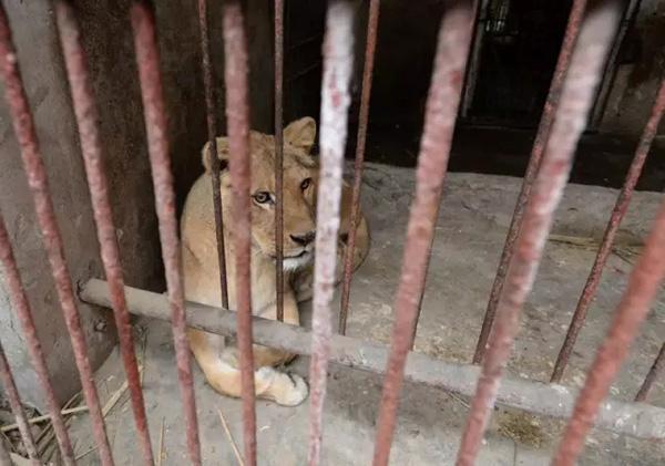 """重庆""""一个人的动物园""""已停业整顿,大量私人动物园或被淘汰 - 梅思特 - 你拥有很多,而我,只有你。。。"""