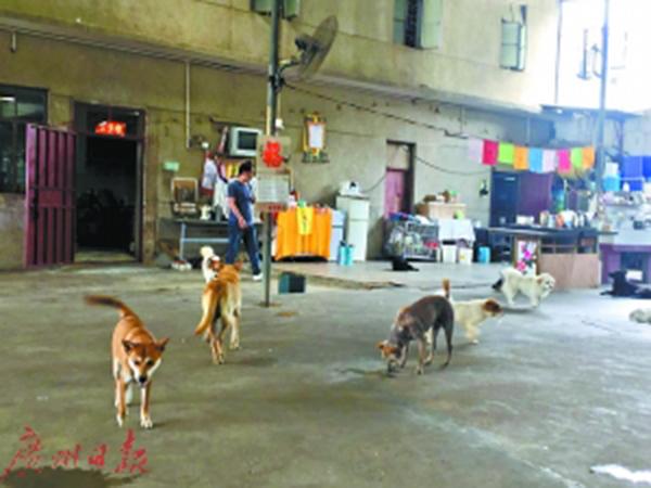 夫妻卖深圳两套房救助百余流浪狗,屡遭投诉目前又被责令搬走 - 梅思特 - 你拥有很多,而我,只有你。。。