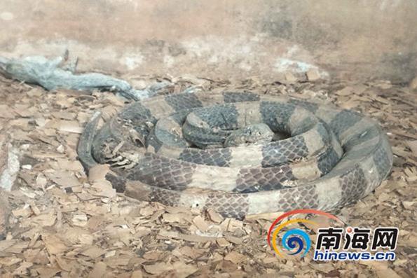 """海口一动物园蛇成蛇干被指""""动物炼狱"""",林业部门已责令整改 - 梅思特 - 你拥有很多,而我,只有你。。。"""