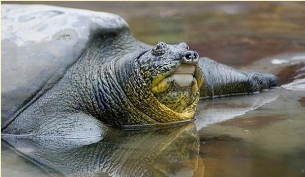 """云南发布省内生物物种红色名录:绿孔雀、斑鳖被列为""""极危"""" - 梅思特 - 你拥有很多,而我,只有你。。。"""