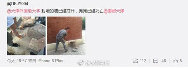天津一大学封死地下室致流浪狗死亡?校方否认:死亡已久 - 梅思特 - 你拥有很多,而我,只有你。。。