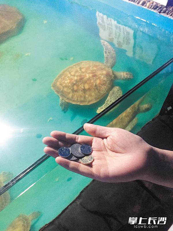 湖南烈士公园最大的那只海龟走了:因误食祈福硬币被噎死 - 梅思特 - 你拥有很多,而我,只有你。。。
