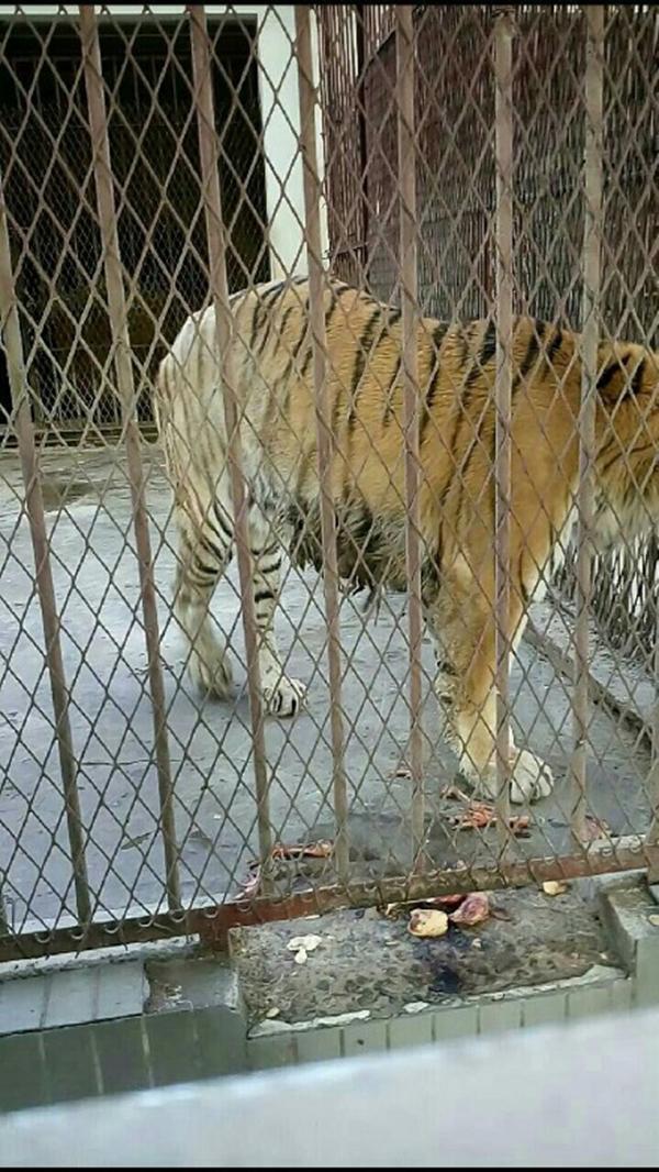 河南许昌一动物园被指虐待动物,园长否认:是游客要求变高 - 梅思特 - 你拥有很多,而我,只有你。。。