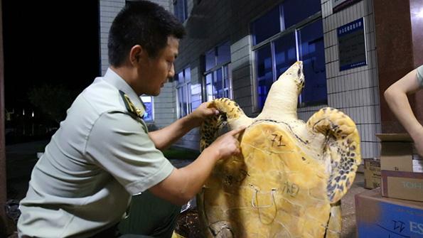 """广西边防查获30多只玳瑁标本,""""用开水烫死""""系贩卖噱头 - 梅思特 - 你拥有很多,而我,只有你。。。"""