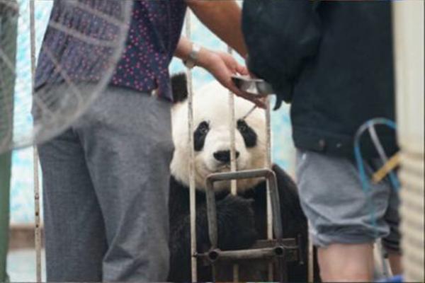 """中国大熊猫保护中心:本月还将检查安阳""""边抽烟边喂大熊猫"""" - 梅思特 - 你拥有很多,而我,只有你。。。"""