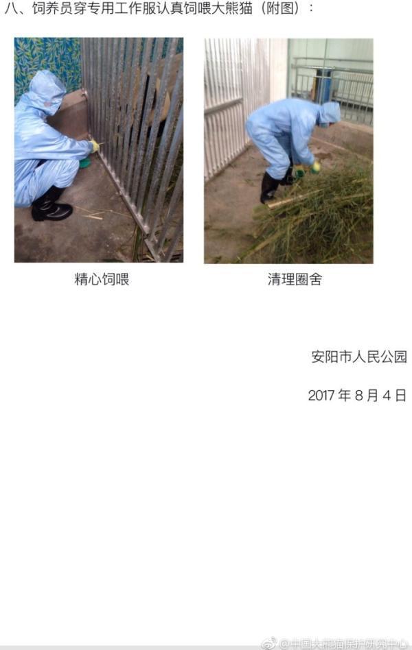 河南安阳一公园员工边抽烟边喂大熊猫引质疑,园方称已整改 - 梅思特 - 你拥有很多,而我,只有你。。。