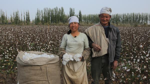 去新疆摘棉花,在中国长绒棉之乡阿瓦提县体验丰收