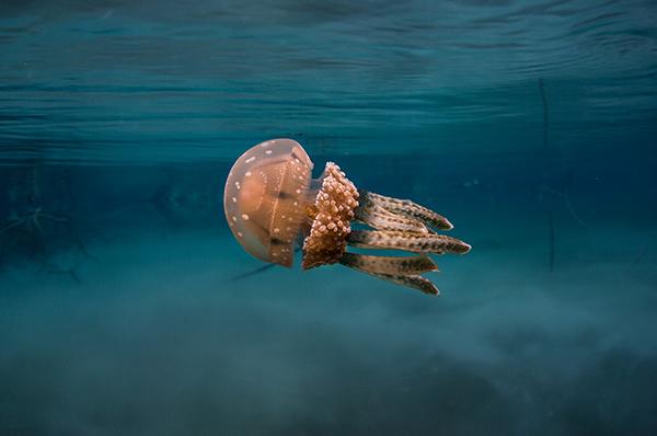 海成湖探秘:说大型作育皿里的潜游恐怕更适合