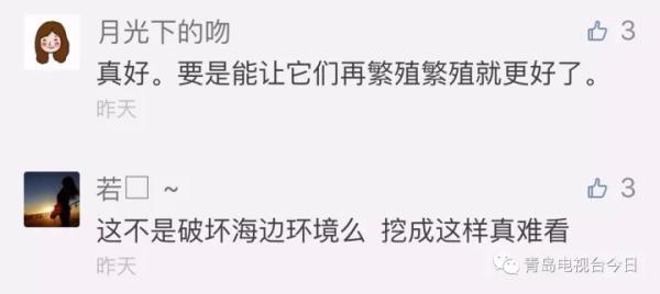 """青岛市民组团挖""""海知了"""",专家:可以吃,但再吃又要灭绝了"""