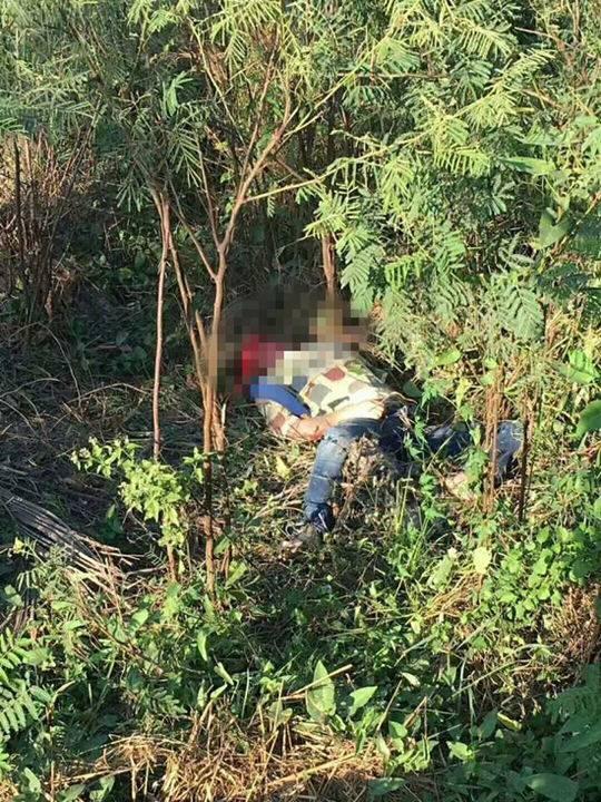 泰国再现大象伤人事件:重庆一领队被踩踏,当场昏迷正抢救