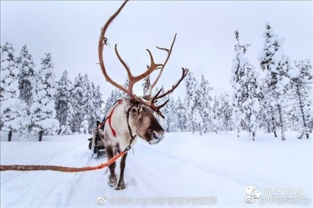 圣诞节 拉着圣诞雪橇的是麋鹿 还是驯鹿 别再
